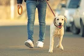 გავასეირნეფ ძაღლს 2 საათით